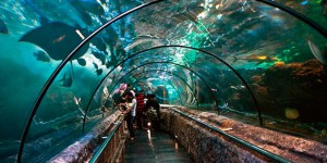 Sea world at Jakarta Indonesia