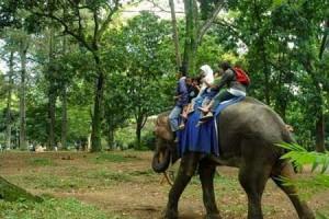 Naik Gajah di Kebun binatang Bandung