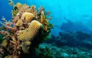 Beautiful Pramuka Island Indonesia