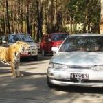 taman safari 150x150 DAFTAR TEMPAT WISATA DI BOGOR YANG KEREN