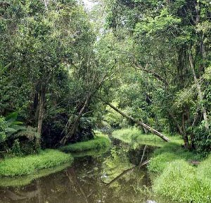 Wain River Forest Indonesia