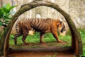 Ragunan Zoo Jakarta Indonesia