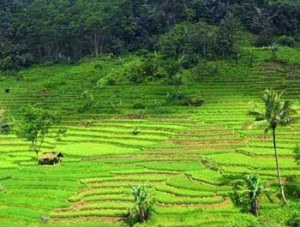 Objek Wisata Curug Cileat Subang Jawa Barat