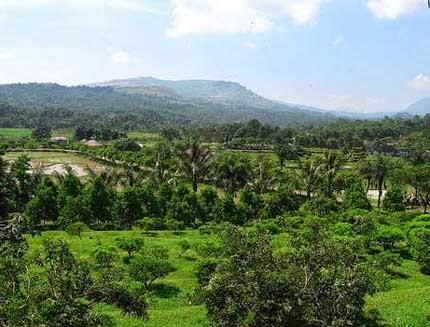 Kebun wisata pasirmukti Bogor