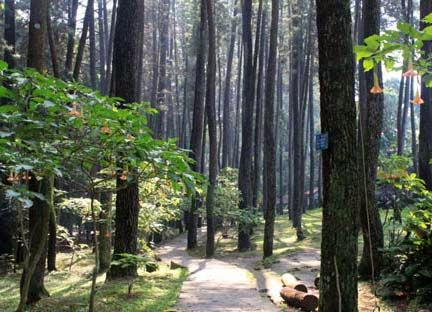 Taman Hutan Raya Juanda Bandung 2