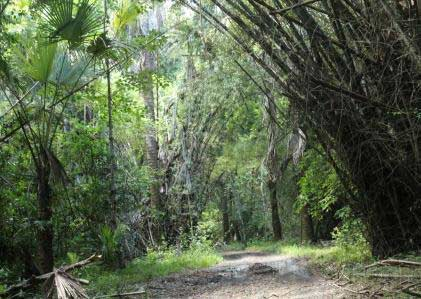 Alas Purwo Jungle