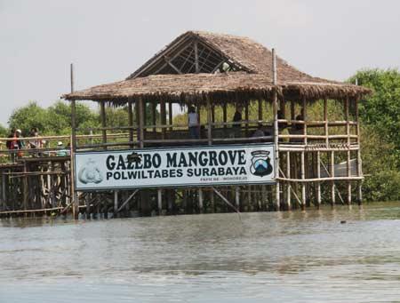 Ekowisata mangrove Wonorejo 3