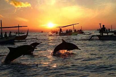 Dolphin at lovina beach
