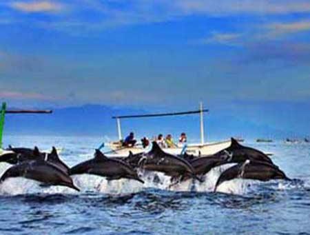 Beautiful dolphin at Bali Island