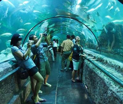Best Travel Indonesia: SEAWORLD ANCOL, SEA WORLD TOURISM