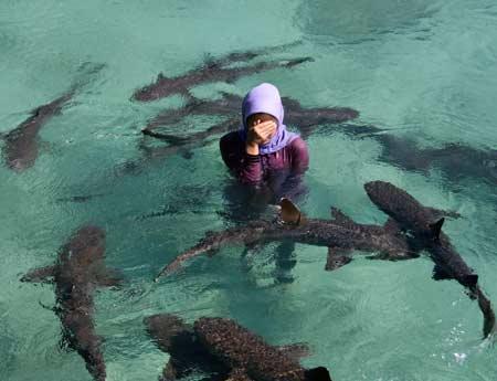 Berenang bersama hiu di Pulau Menjangan Besar