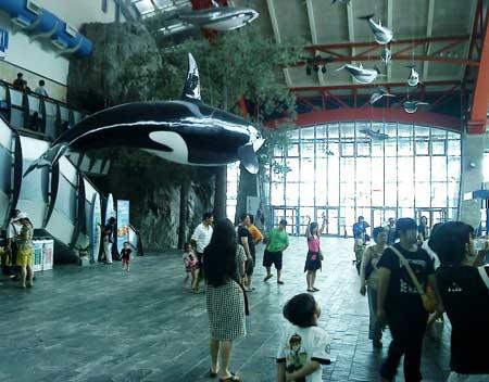 Museum Seaworld Ancol Sisi Lain Wisata Dufan Tempat
