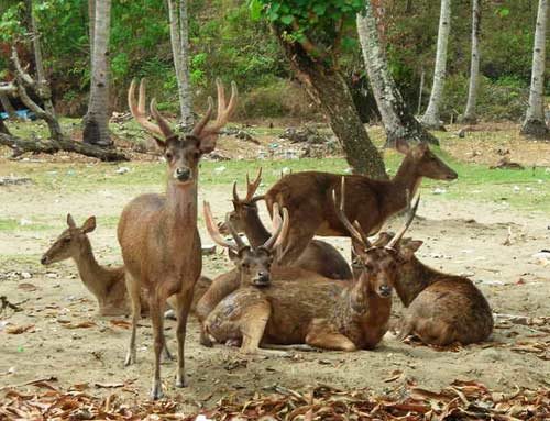 Taman Wisata Alam Pananjung