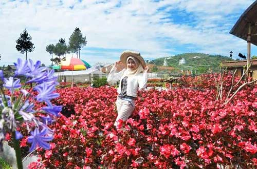 Review Taman Bunga Begonia Lembang Bandung Tempat Wisata Terbaik Di Indonesia