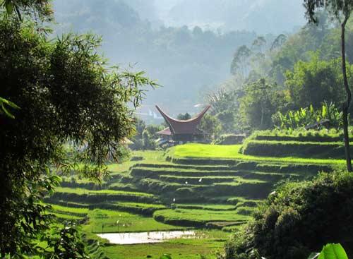 Budaya Tana Toraja
